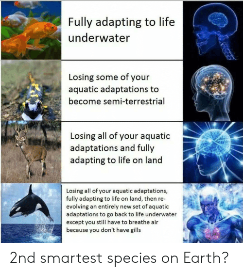 Except You: Fully adapting to life  underwater  Losing some of your  aquatic adaptations to  become semi-terrestrial  Losing all of your aquatic  adaptations and fully  adapting to life on land  Losing all of your aquatic adaptations,  fully adapting to life on land, then re-  evolving an entirely new set of aquatic  adaptations to go back to life underwater  except you still have to breathe air  because you don't have gills 2nd smartest species on Earth?