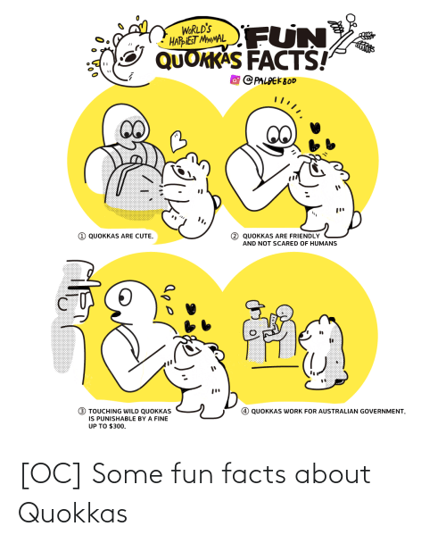 Friendly: FUN  WORLD'S  HARIEST MMMAL  QUOKKAS FACTS!  O PALPEK800  1 QUOKKAS ARE CUTE.  2 QUOKKAS ARE FRIENDLY  AND NOT SCARED OF HUMANS  (!)  3 TOUCHING WILD QUOKKAS  IS PUNISHABLE BY A FINE  UP TO $300.  QUOKKAS WORK FOR AUSTRALIAN GOVERNMENT. [OC] Some fun facts about Quokkas