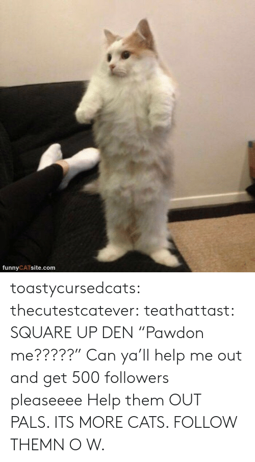 """Cats, Square Up, and Tumblr: funnyCATsite.com toastycursedcats:  thecutestcatever:  teathattast: SQUARE UP DEN """"Pawdon me?????""""  Can ya'll help me out and get 500 followers pleaseeee   Help them OUT PALS. ITS MORE CATS. FOLLOW THEMN O W."""