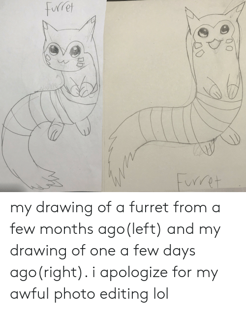 Lol, Editing, and One: Furet  Frret my drawing of a furret from a few months ago(left) and my drawing of one a few days ago(right). i apologize for my awful photo editing lol