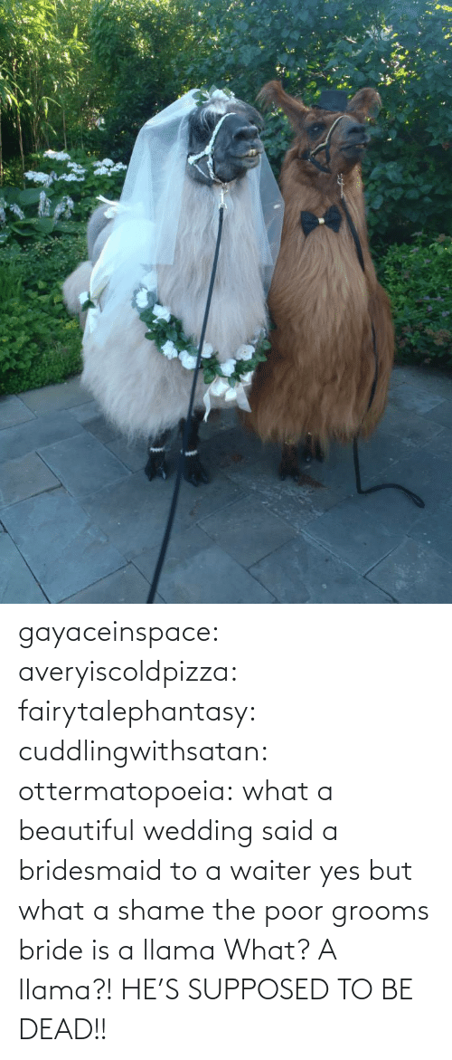 llama: gayaceinspace: averyiscoldpizza:  fairytalephantasy:  cuddlingwithsatan:  ottermatopoeia:  what a beautiful wedding  said a bridesmaid to a waiter  yes but what a shame  the poor grooms bride is a llama  What? A llama?! HE'S SUPPOSED TO BE DEAD!!