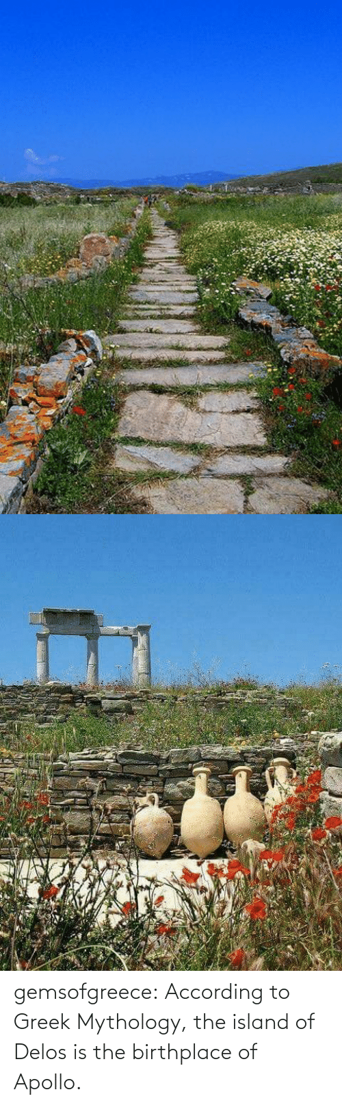 island: gemsofgreece: According to Greek Mythology, the island of Delos is the birthplace of Apollo.