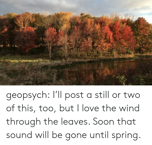 be gone: geopsych: I'll post a still or two of this, too, but I love the wind through the leaves. Soon that sound will be gone until spring.