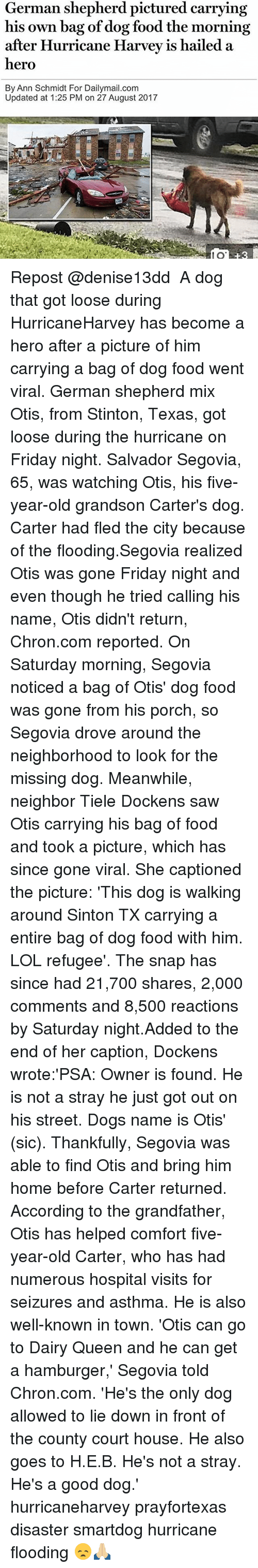 Dogs, Food, and Friday: German shepherd pictured carrying  his own bag of dog food the morning  after Hurricane Harvev is hailed a  hero  By Ann Schmidt For Dailymail.com  Updated at 1:25 PM on 27 August 2017  80  8 Repost @denise13dd ・・・ A dog that got loose during HurricaneHarvey has become a hero after a picture of him carrying a bag of dog food went viral. German shepherd mix Otis, from Stinton, Texas, got loose during the hurricane on Friday night. Salvador Segovia, 65, was watching Otis, his five-year-old grandson Carter's dog. Carter had fled the city because of the flooding.Segovia realized Otis was gone Friday night and even though he tried calling his name, Otis didn't return, Chron.com reported. On Saturday morning, Segovia noticed a bag of Otis' dog food was gone from his porch, so Segovia drove around the neighborhood to look for the missing dog. Meanwhile, neighbor Tiele Dockens saw Otis carrying his bag of food and took a picture, which has since gone viral. She captioned the picture: 'This dog is walking around Sinton TX carrying a entire bag of dog food with him. LOL refugee'. The snap has since had 21,700 shares, 2,000 comments and 8,500 reactions by Saturday night.Added to the end of her caption, Dockens wrote:'PSA: Owner is found. He is not a stray he just got out on his street. Dogs name is Otis' (sic). Thankfully, Segovia was able to find Otis and bring him home before Carter returned. According to the grandfather, Otis has helped comfort five-year-old Carter, who has had numerous hospital visits for seizures and asthma. He is also well-known in town. 'Otis can go to Dairy Queen and he can get a hamburger,' Segovia told Chron.com. 'He's the only dog allowed to lie down in front of the county court house. He also goes to H.E.B. He's not a stray. He's a good dog.' hurricaneharvey prayfortexas disaster smartdog hurricane flooding 😞🙏🏼