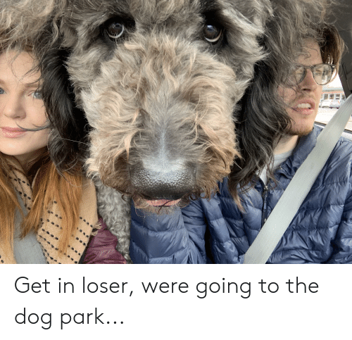 Dog, Park, and The Dog: Get in loser, were going to the dog park...