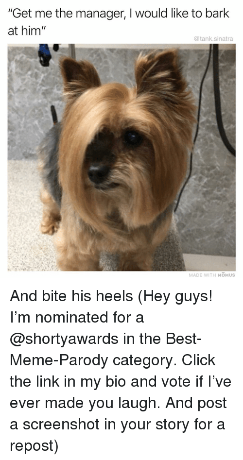 """Click, Funny, and Meme: """"Get me the manager, I would like to bark  at him  @tank.sinatra  MADE WITH MOMUS And bite his heels (Hey guys! I'm nominated for a @shortyawards in the Best-Meme-Parody category. Click the link in my bio and vote if I've ever made you laugh. And post a screenshot in your story for a repost)"""