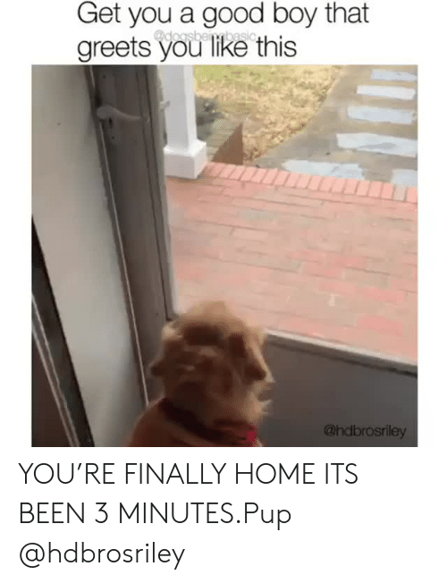 Boy That: Get you a good boy that  doasbeibesio  greets you like this  @hdbrosriley YOU'RE FINALLY HOME ITS BEEN 3 MINUTES.Pup @hdbrosriley