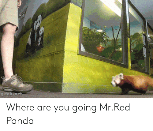 Panda, Net, and Red: gifak-net Where are you going Mr.Red Panda