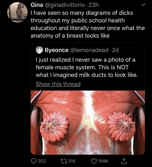 Dicks, Saw, and School: Gina @ginadivittorio 23h  I have seen so many diagrams of dicks  throughout my public school health  education and literally never once what the  anatomy of a breast looks like  Byeonce @lemonadead 2c  I just realized I never saw a photo of a  female muscle system. This is NOT  what l imagined milk ducts to look like  Show this thread  302 31 199K