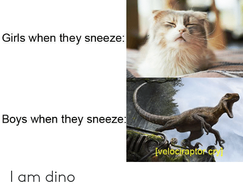 Girls, Boys, and Dino: Girls when they sneeze:  Boys when they sneeze  velocrapto c I am dino