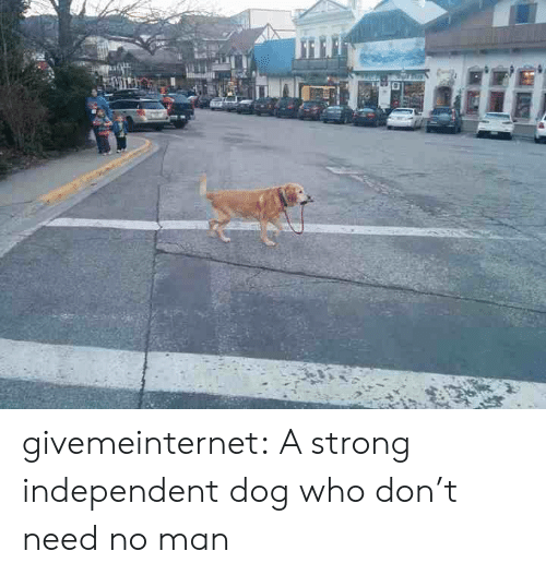 Independent: givemeinternet:  A strong independent dog who don't need no man