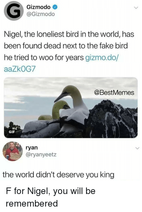 Fake, Gif, and Gizmodo: Gizmodo  @Gizmodo  Nigel, the loneliest bird in the world, has  been found dead next to the fake bird  he tried to woo for years gizmo.do/  aaZkOG7  @BestMemes  GIF  ryan  @ryanyeetz  the world didn't deserve you king F for Nigel, you will be remembered