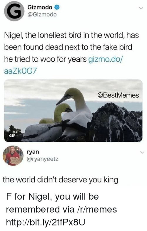Fake, Gif, and Memes: Gizmodo  @Gizmodo  Nigel, the loneliest bird in the world, has  been found dead next to the fake bird  he tried to woo for years gizmo.do/  aaZkOG7  @BestMemes  GIF  ryan  @ryanyeetz  the world didn't deserve you king F for Nigel, you will be remembered via /r/memes http://bit.ly/2tfPx8U