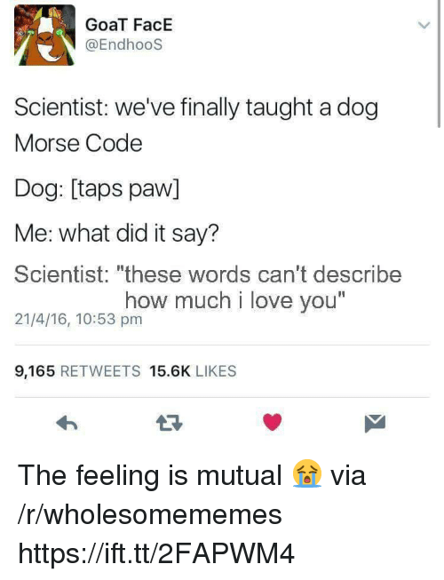 """Love, Goat, and I Love You: GoaT FacE  @EndhooS  Scientist: we've finally taught a dog  Morse Code  Dog: [taps paw]  Me: what did it say?  Scientist: """"these words can't describe  21/4/16, 10:53 pm  how much i love you  I1  9,165 RETWEETS 15.6K LIKES The feeling is mutual 😭 via /r/wholesomememes https://ift.tt/2FAPWM4"""