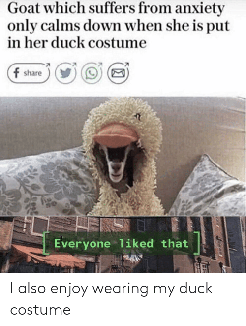 GOAT: Goat which suffers from anxiety  only calms down when she is put  in her duck costume  f share  Everyone liked that I also enjoy wearing my duck costume