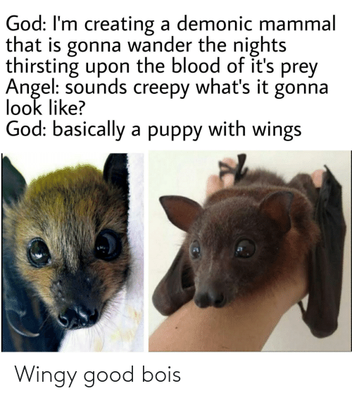 creating: God: I'm creating a demonic mammal  that is gonna wander the nights  thirsting upon the blood of it's prey  Angel: sounds creepy what's it gonna  look like?  God: basically a puppy with wings Wingy good bois