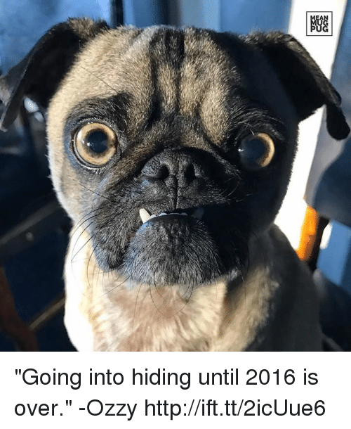 """Ozzies: """"Going into hiding until 2016 is over."""" -Ozzy http://ift.tt/2icUue6"""