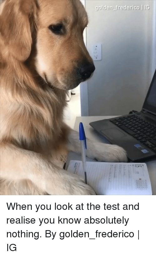 Dank, Test, and 🤖: golden frederico IG When you look at the test and realise you know absolutely nothing.  By golden_frederico | IG