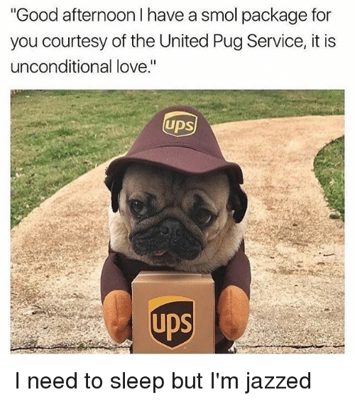 """Pugged: Good afternoon I have a smol package for  you courtesy of the United Pug Service, it is  unconditional love.""""  UDS  UDS I need to sleep but I'm jazzed"""