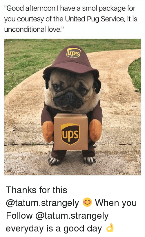 """Pugged: """"Good afternoon I have a smol package for  you courtesy of the United Pug Service, it is  unconditional love.""""  UDS  UDS Thanks for this @tatum.strangely 😊 When you Follow @tatum.strangely everyday is a good day 👌"""
