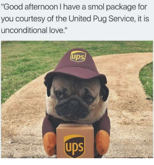 """Pugged: Good afternoon I have a smol package for  you courtesy of the United Pug Service, it is  unconditional love.""""  UDS"""