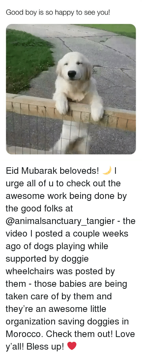 mubarak: Good boy is so happy to see you! Eid Mubarak beloveds! 🌙 I urge all of u to check out the awesome work being done by the good folks at @animalsanctuary_tangier - the video I posted a couple weeks ago of dogs playing while supported by doggie wheelchairs was posted by them - those babies are being taken care of by them and they're an awesome little organization saving doggies in Morocco. Check them out! Love y'all! Bless up! ❤️