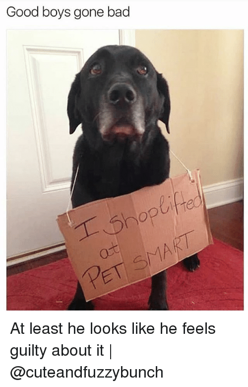 Bad, Memes, and Good: Good boys gone bad  ifre At least he looks like he feels guilty about it | @cuteandfuzzybunch