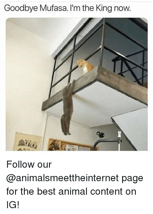 best animal: Goodbye Mufasa. I'm the King now. Follow our @animalsmeettheinternet page for the best animal content on IG!