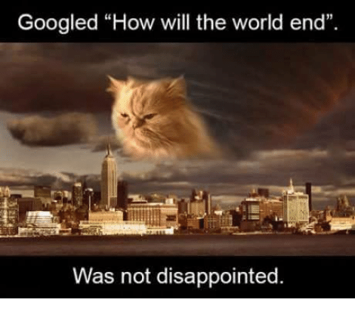 """Disappointed, Google, and Grumpy Cat: Googled """"How will the world end"""".  Was not disappointed"""