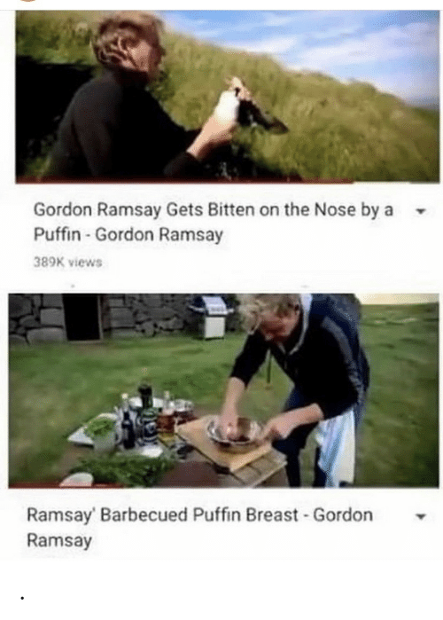 Gordon Ramsay, Bitten, and Breast: Gordon Ramsay Gets Bitten on the Nose by a  Puffin-Gordon Ramsay  389K views  Ramsay Barbecued Puffin Breast Gordon  Ramsay .