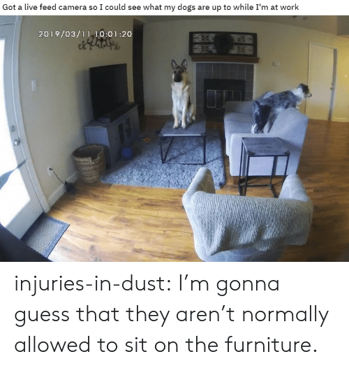 Dogs, Target, and Tumblr: Got a live feed camera so I could see what my dogs are up to while I'm at work  2019/03/11 10:01:20 injuries-in-dust: I'm gonna guess that they aren't normally allowed to sit on the furniture.