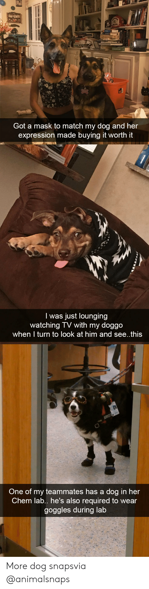 watching tv: Got a mask to match my dog and her  expression made buying it worth it   I was just lounging  watching TV with my doggo  when I turn to look at him and see..this   One of my teammates has a dog in her  Chem lab., he's also required to wear  goggles during lab More dog snapsvia @animalsnaps