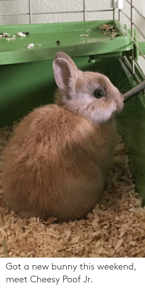 poof: Got a new bunny this weekend, meet Cheesy Poof Jr.