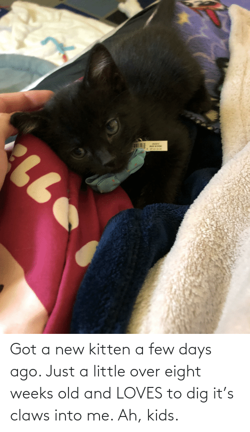 a-few-days: Got a new kitten a few days ago. Just a little over eight weeks old and LOVES to dig it's claws into me. Ah, kids.