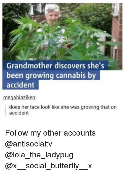 lolas: Grandmother discovers she's  been growing cannabis by  accident  16  megablaziken:  does her face look like she was growing that on  accident Follow my other accounts @antisocialtv @lola_the_ladypug @x__social_butterfly__x