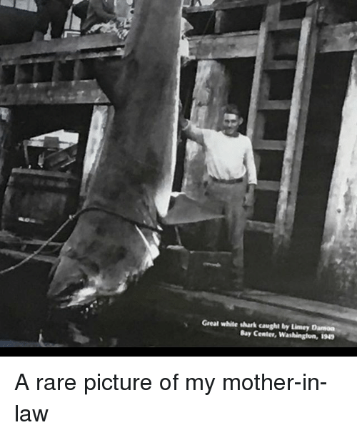 sharking: Greal white shark caught by Limey Damon  Bay Center,Washingion, 1943 A rare picture of my mother-in-law