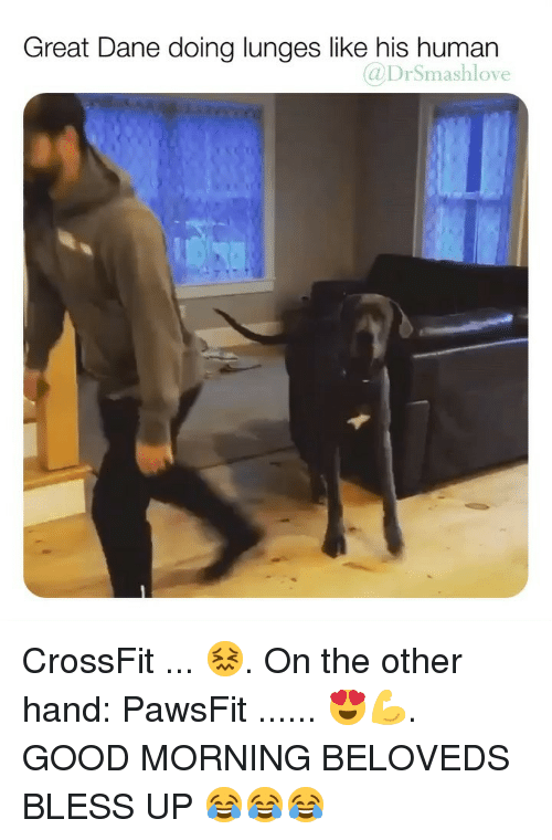 on the other hand: Great Dane doing lunges like his human  @DrSmashlove CrossFit ... 😖. On the other hand: PawsFit ...... 😍💪. GOOD MORNING BELOVEDS BLESS UP 😂😂😂