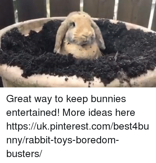 Bunni: Great way to keep bunnies entertained! More ideas here https://uk.pinterest.com/best4bunny/rabbit-toys-boredom-busters/