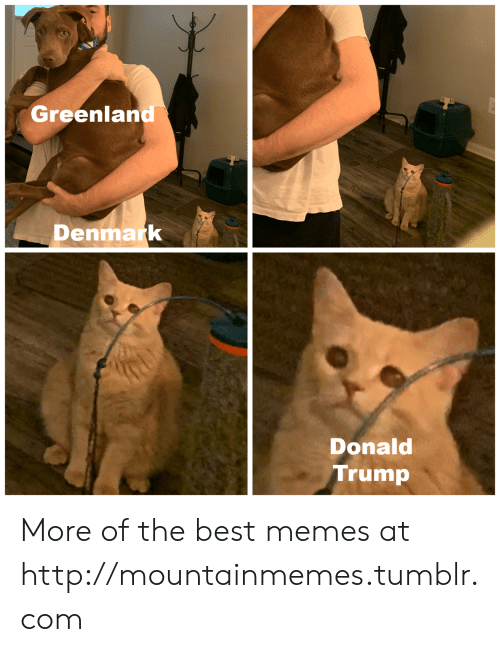 Donald Trump, Memes, and Tumblr: Greenland  Denmark  Donald  Trump More of the best memes at http://mountainmemes.tumblr.com