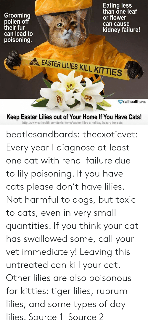 poison control: Groomin  ollen o  heir fur  can lead to  poisoning.  Eating less  than one leaf  or flower  can cause  kidney failure!  EASTER LILIES KILL KITTIES  眥cathealth.com  Keep Easter Lilies out of Your Home If You Have Cats!  http:l/www.cathealth.com/toxic-items/easter-lilies-a-holiday-hazard-for-cats beatlesandbards: theexoticvet: Every year I diagnose at least one cat with renal failure due to lily poisoning. If you have cats please don't have lilies. Not harmful to dogs, but toxic to cats, even in very small quantities. If you think your cat has swallowed some, call your vet immediately! Leaving this untreated can kill your cat. Other lilies are also poisonous for kitties: tiger lilies, rubrum lilies, and some types of day lilies. Source 1 Source 2