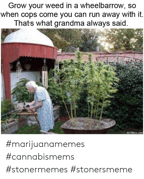 Grandma, Run, and Weed: Grow your weed in a wheelbarrow, so  when cops come you can run away with it.  Thats what grandma always said #marijuanamemes #cannabismems #stonermemes #stonersmeme