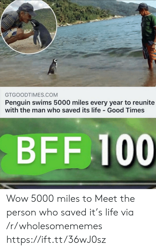 bff: GTGOODTIMES.COM  Penguin swims 5000 miles every year to reunite  with the man who saved its life Good Times  BFF 100 Wow 5000 miles to Meet the person who saved it's life via /r/wholesomememes https://ift.tt/36wJ0sz