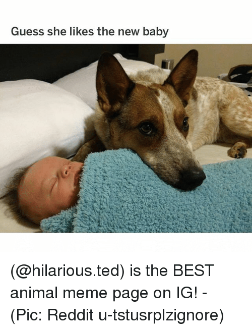 Animal Meme: Guess she likes the new baby (@hilarious.ted) is the BEST animal meme page on IG! - (Pic: Reddit u-tstusrplzignore)