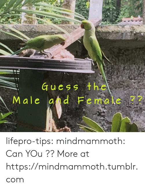 Tumblr, Blog, and Guess: Guess the  Male ad Female  22 lifepro-tips: mindmammoth: Can YOu ?? More at https://mindmammoth.tumblr.com
