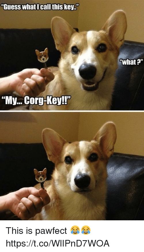 """Corg: Guess whatI call this key..""""  what ?""""  """"My...Corg-Key!!"""" This is pawfect 😂😂 https://t.co/WlIPnD7WOA"""