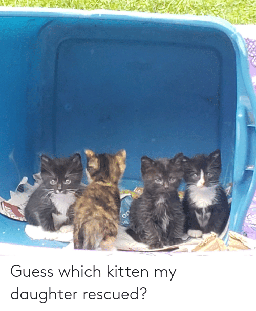 my daughter: Guess which kitten my daughter rescued?