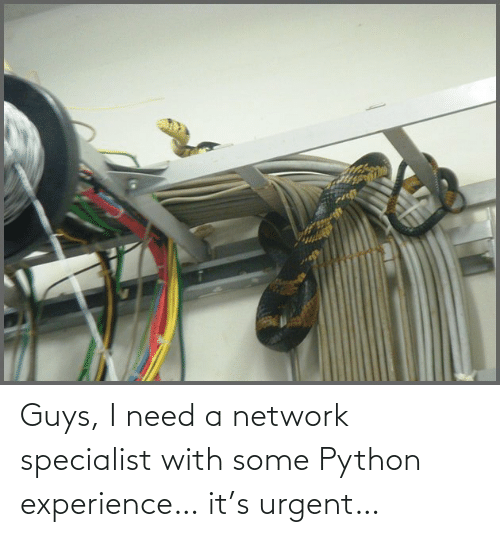python: Guys, I need a network specialist with some Python experience… it's urgent…