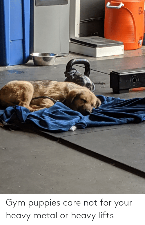 Lifts: Gym puppies care not for your heavy metal or heavy lifts