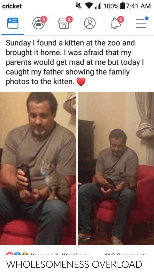 Cricket: h( ▼ ill 100%'17:41 AM  cricket  2  2  Sunday I found a kitten at the zoo and  brought it home. I was afraid that my  parents would get mad at me but today I  caught my father showing the family  photos to the kitten. WHOLESOMENESS OVERLOAD