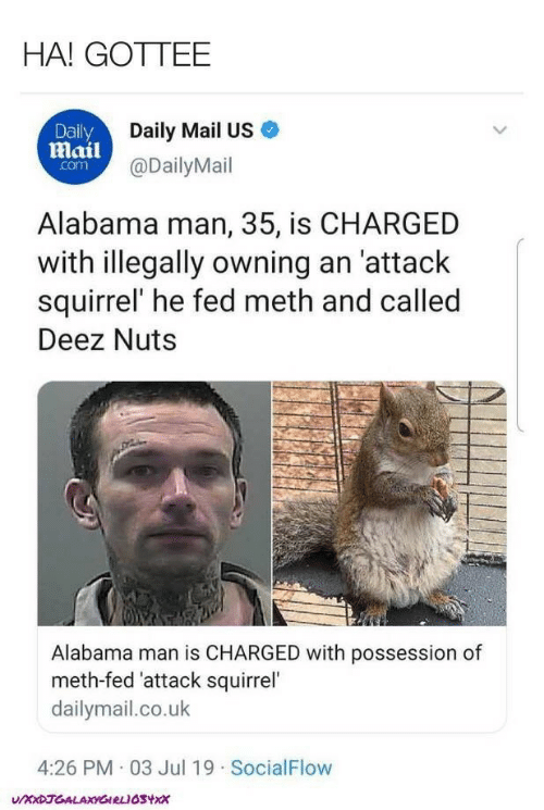 Deez Nuts, Alabama, and Daily Mail: HA! GOTTEE  Daily Mail US  Daily  mail@DailyMail  com  Alabama man, 35, is CHARGED  with illegally owning an 'attack  squirrel' he fed meth and called  Deez Nuts  Alabama man is CHARGED with possession of  meth-fed 'attack squirrel  dailymail.co.uk  4:26 PM 03 Jul 19 SocialFlow  UXxDJGALAXYGIRLIOSYxx